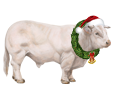Toro charolais - pelaje 117