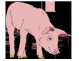 Cerdo - pelaje 1340000004