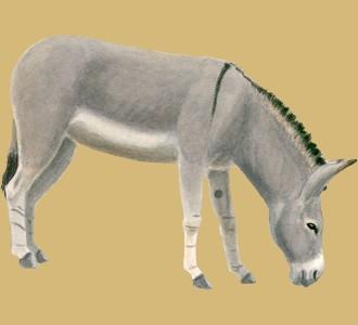 Acoger a un animal de la granja de especie burro gris