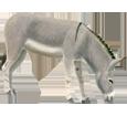 Burro gris adulto - pelaje 52
