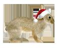Conejo de campo  - pelaje 117