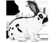 Conejo de campo  - pelaje 1340000002