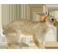 Conejo de campo  adulto - pelaje 52